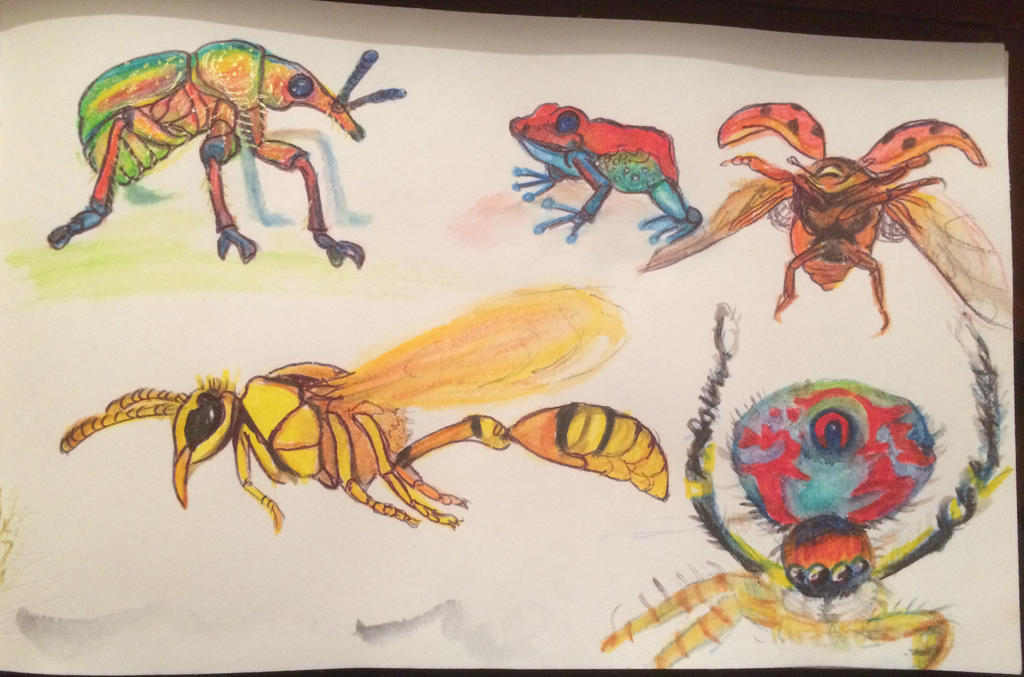 Bug Study... by FireLillyLove