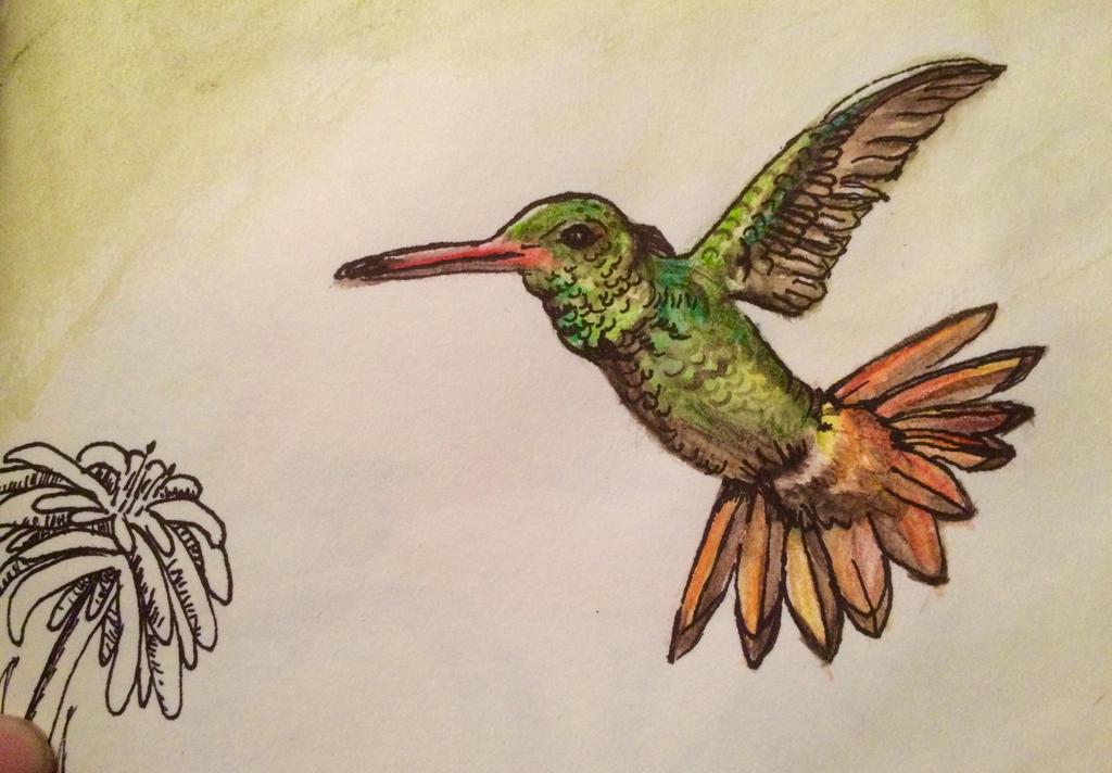 Little sketchbook humming bird by FireLillyLove