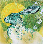 THE GREEN HARE..A DIVERSION.