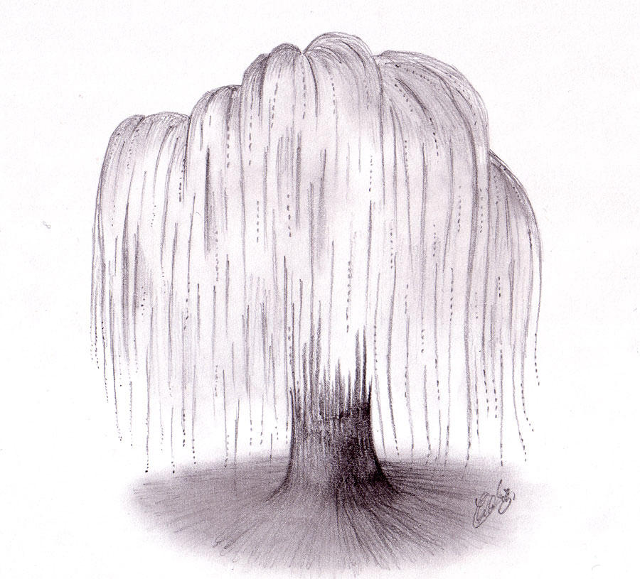 Weeping Willow Tree Tattoo Black Weeping Willow Tree by
