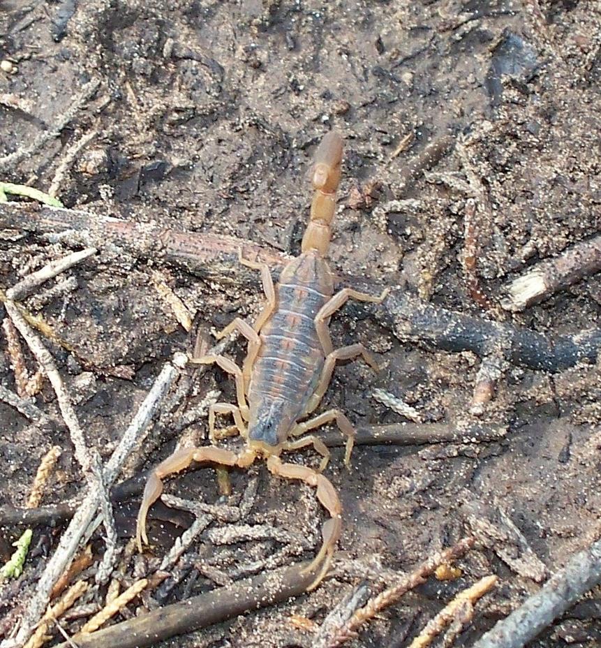 Scorpion a closer look. by ljljljs