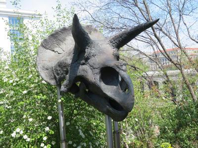 Triceratops Skull by TuxedoToad
