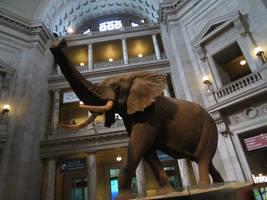 Smithsonian Natural History Museum: Rotunda Pic. 1