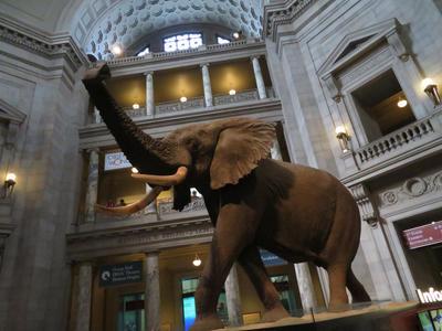 Smithsonian Natural History Museum: Rotunda Pic. 1 by TuxedoToad