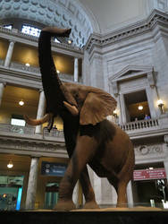 Smithsonian Natural History Museum: Rotunda Pic. 2