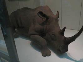 Smithsonian Museum: Mammal Hall: Black Rhinoceros
