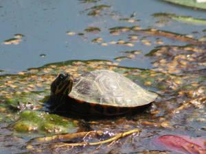 Turtle Texture