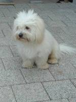 cute dog by antonyTheartlover