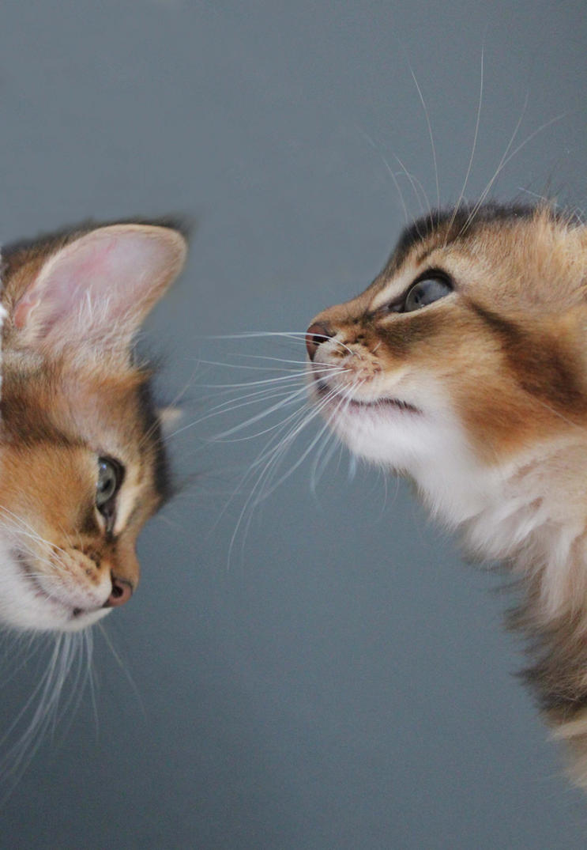 Kittens by AmySmint