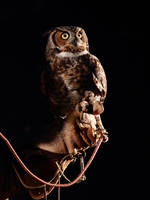 Great Horned Owl by corpseweles