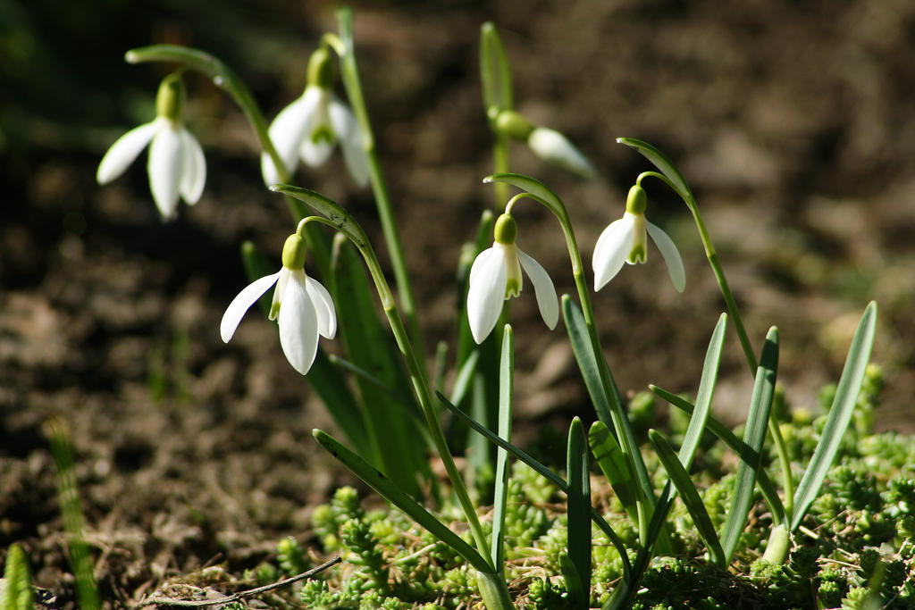 First witnesses of spring