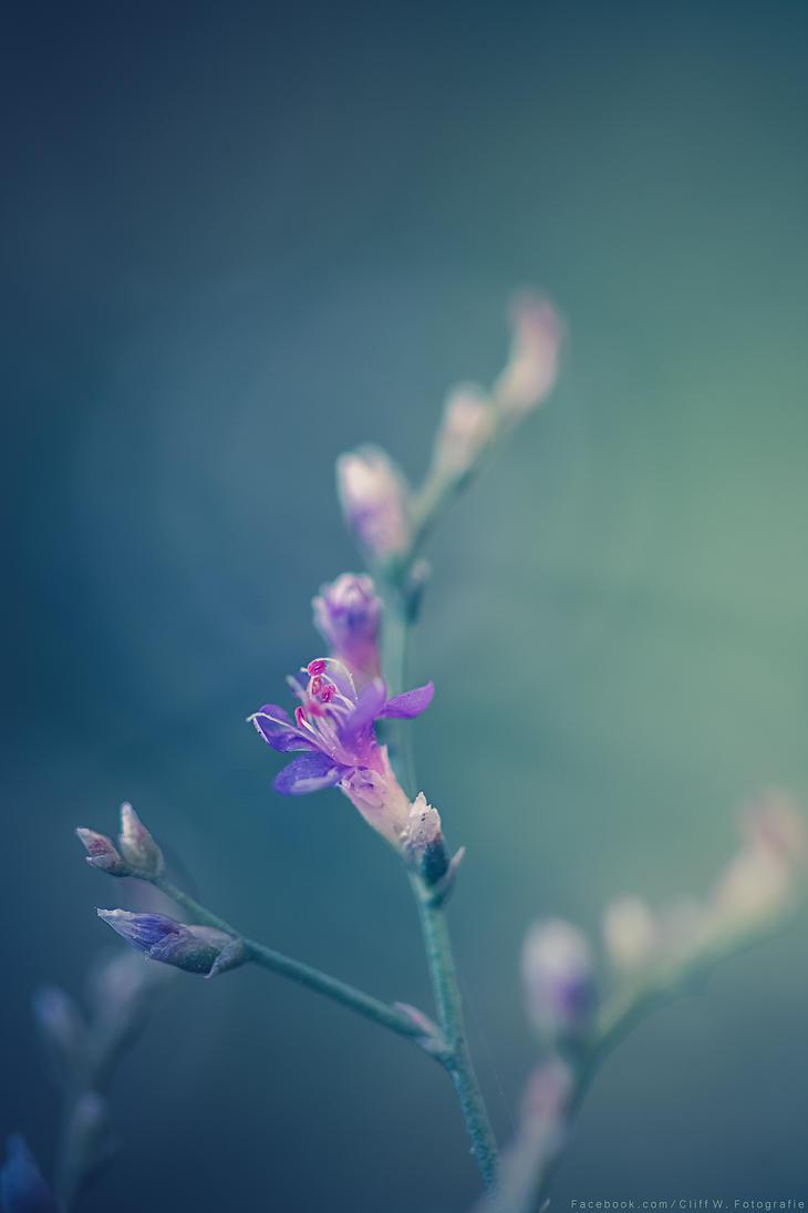 Purple surprise by CliffWFotografie