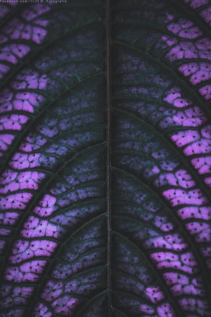 interesting leaf by CliffWFotografie