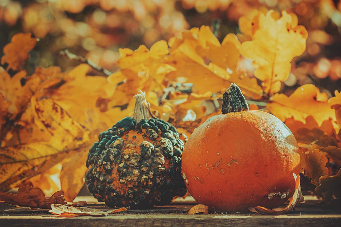 pumpkin by CliffWFotografie