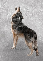 The lone Wolf by Cisanne