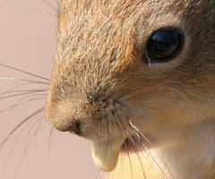 Nutty, closeup by TomiTapio