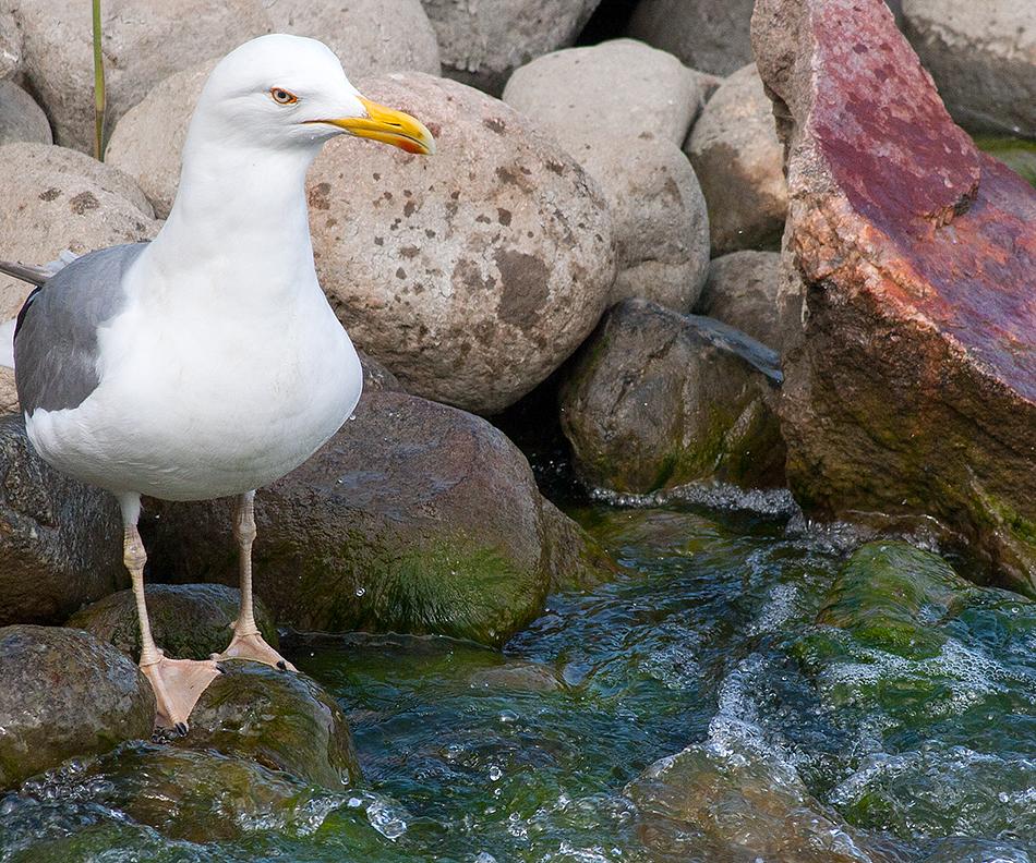 Gull Watching by TomiTapio