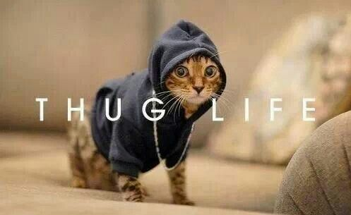 Thug Life by mazdaspeed3
