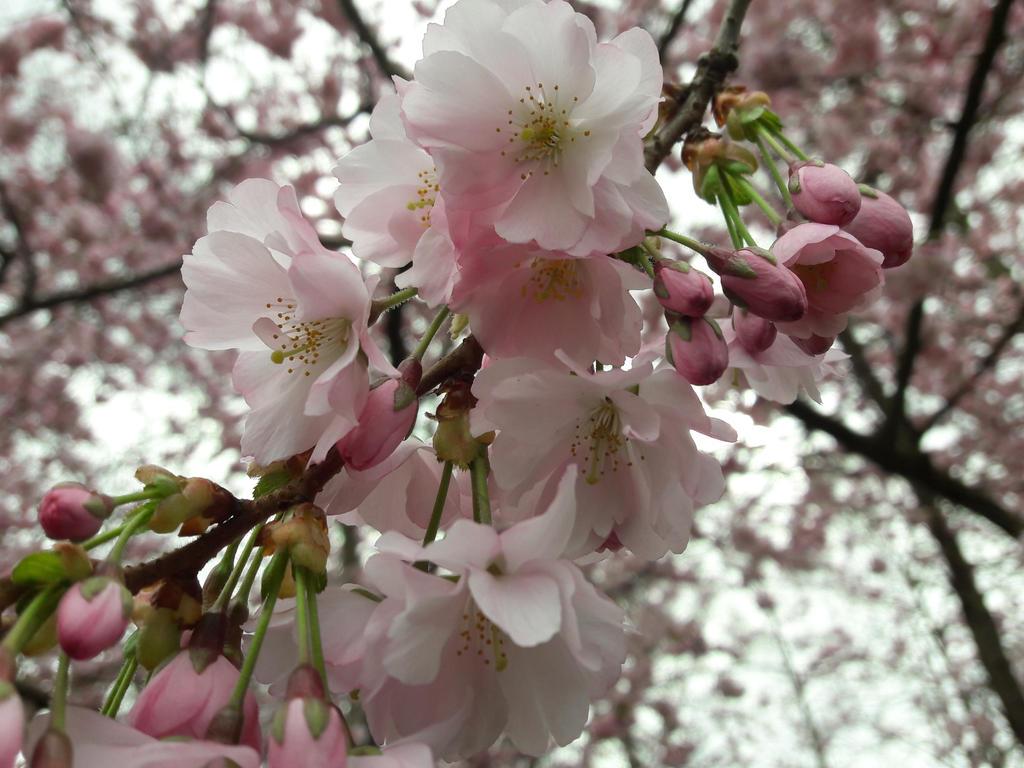 Spring by Icaros-must-die