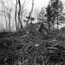 the stump