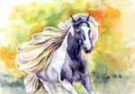 Gypsy Vanner horse by VeronikaFrizz