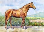 Budionii horse