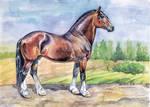 Vladimirsky horse