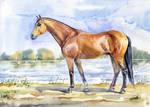 Wielkopolska horse by VeronikaFrizz