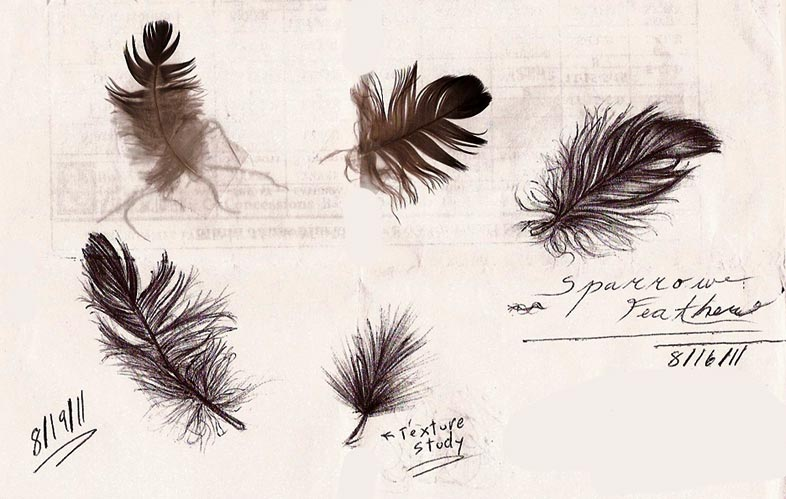 Feather Studies by Mitch-el