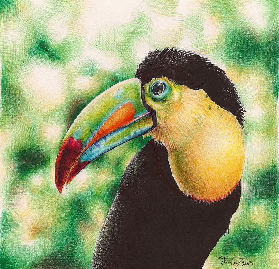 Toucan Bird Drawing Toucan - Ballpoint pen...