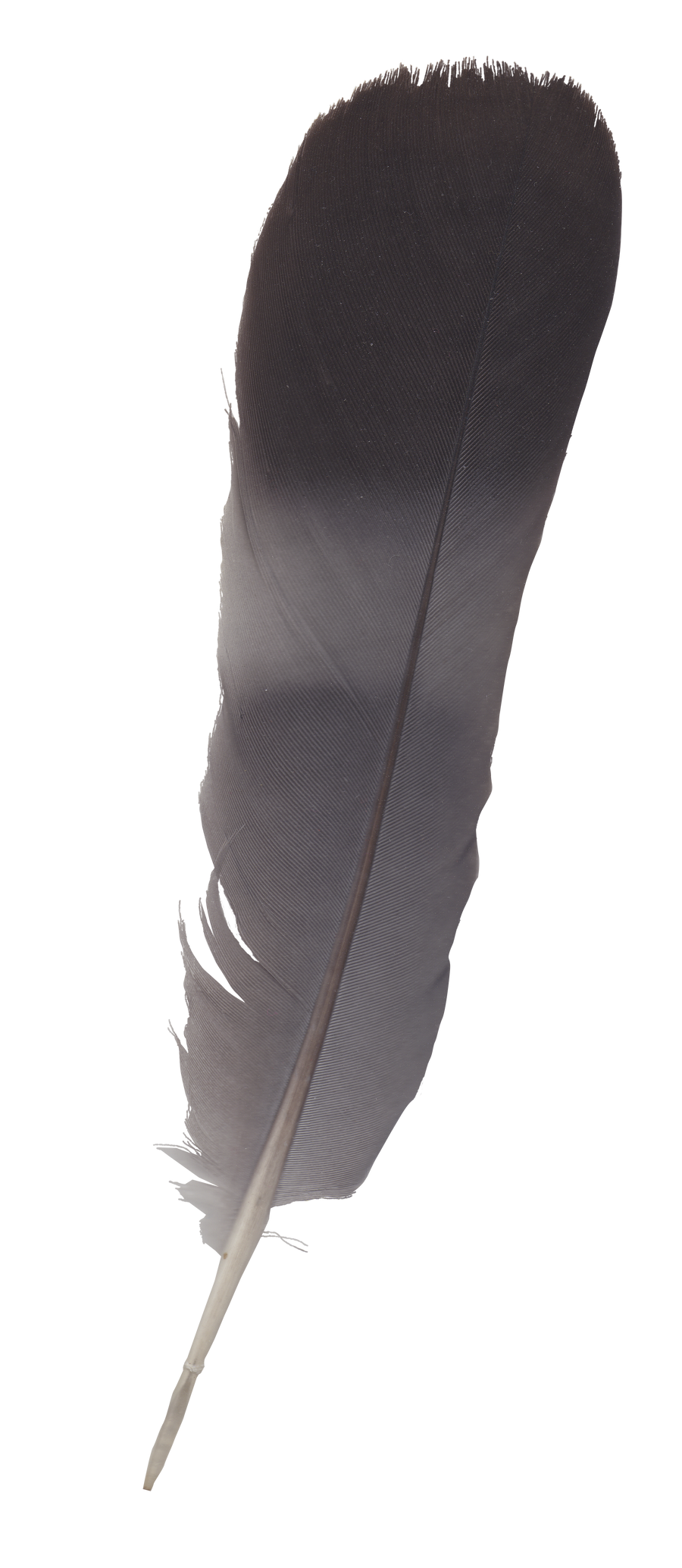 feather - cutout by Didier-Bernard