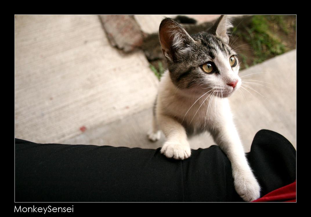 Kittie Kat 3 by MonkeySensei