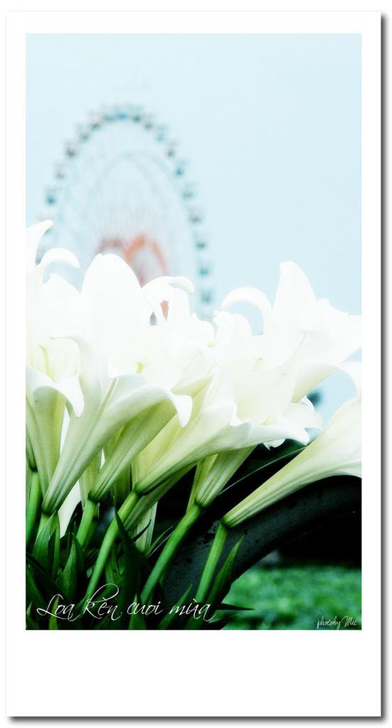 Loa ken flower