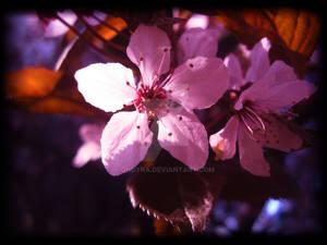 flower ......