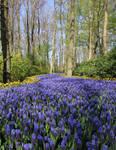 Purple Trail by allison030