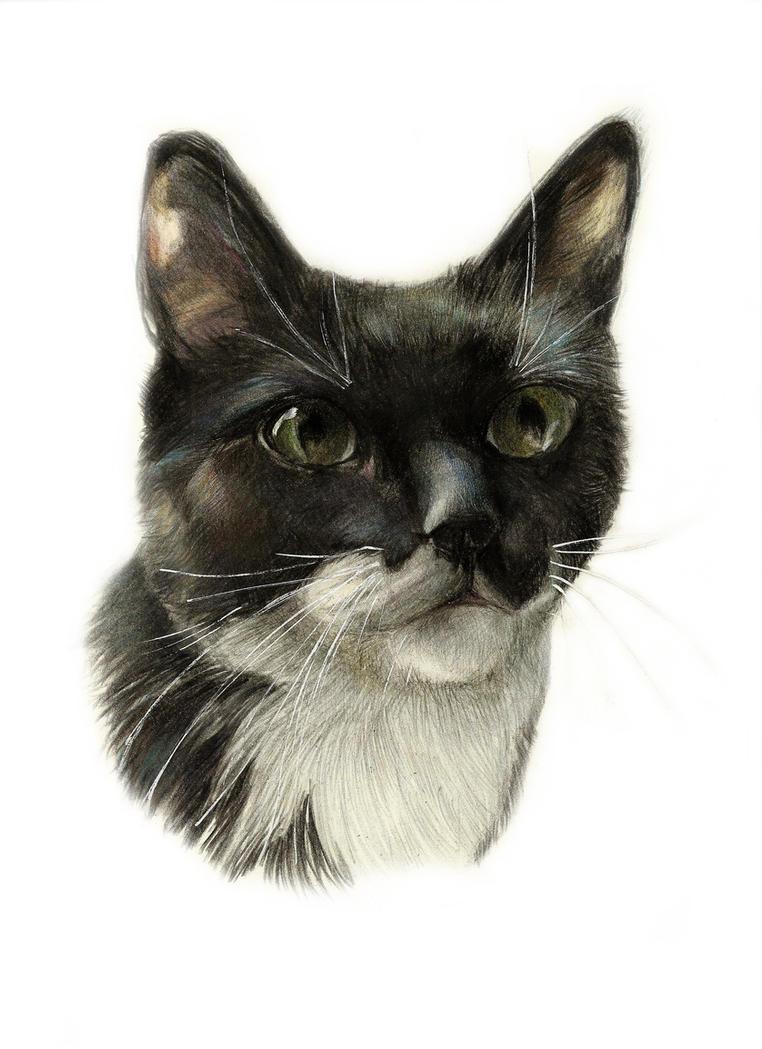 Blackcat by Renatex24