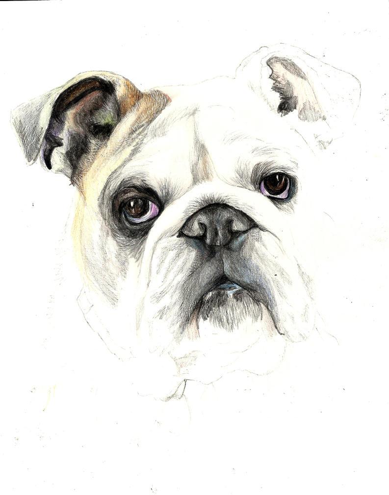 Pug In Progress by Renatex24