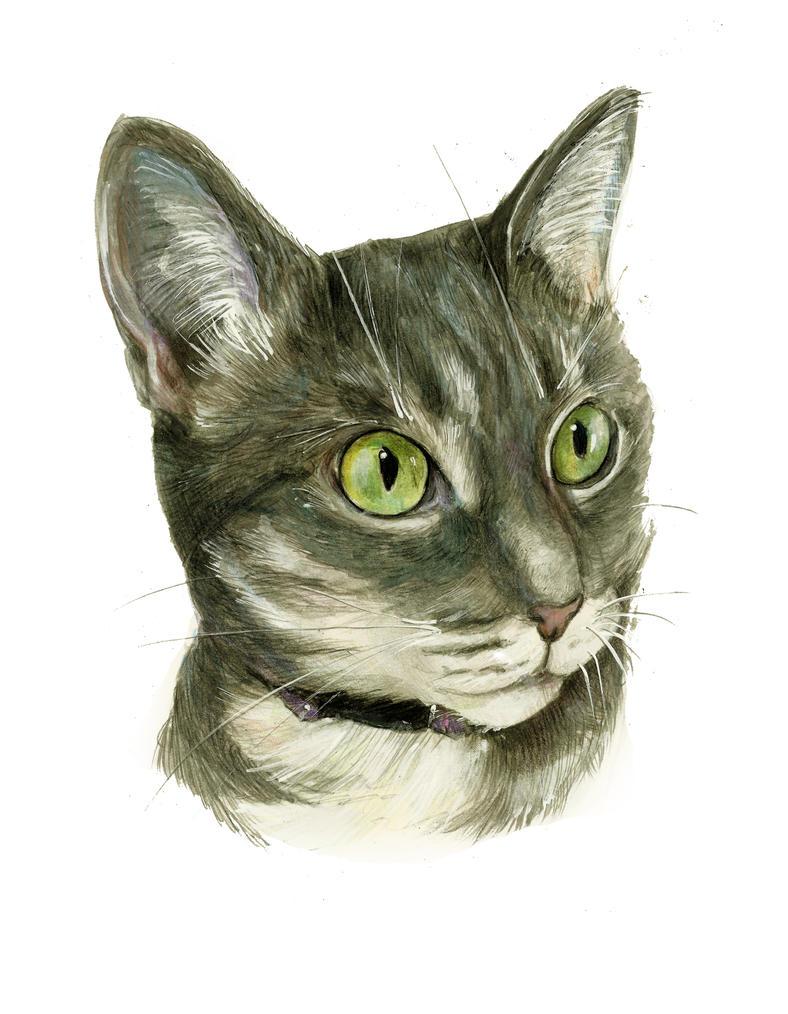 Cat-graysmall by Renatex24