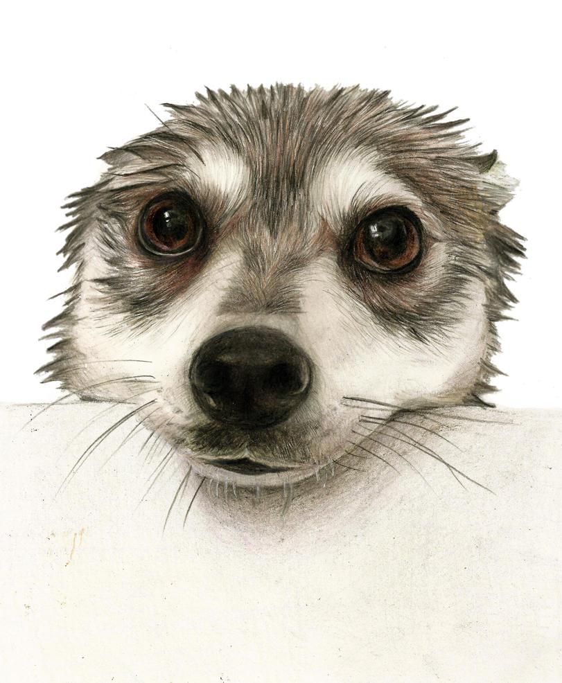 Wet dog by Renatex24