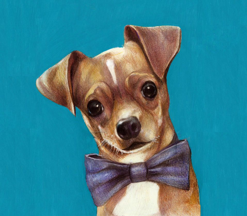 Bow-tie dog by Renatex24