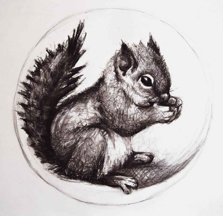 Baby squirrel by KaLa89