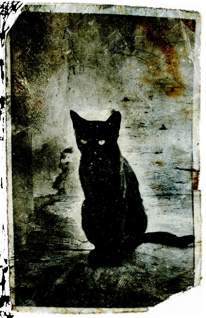 Hammamet Black Cat by SVEM