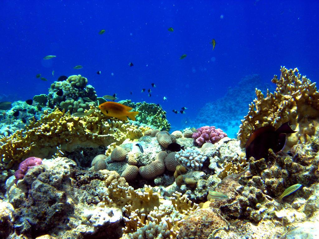 underwater garden by Antasya