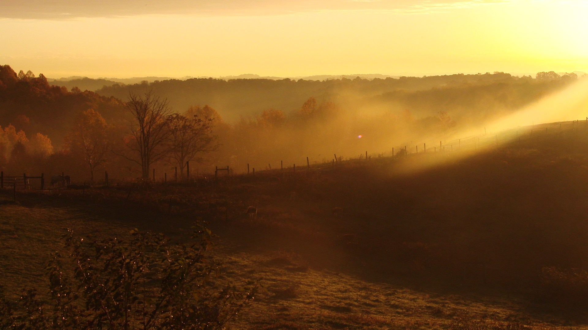 Sun.. by watchfulshepherd