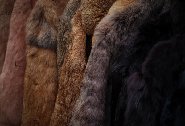 Textures - Fur by MorningMorning