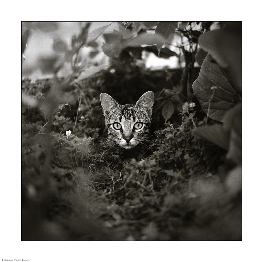 cat by dreamsofautumn