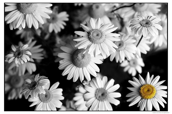 http://fc07.deviantart.net/fs50/f/2009/337/f/2/different_by_dreamsofautumn.jpg