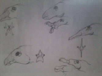 dinocarids head designs by Dragonthunders