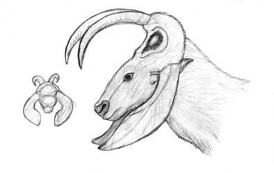 Alloheteroceras by Dragonthunders