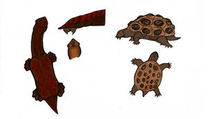 Parasitic turtles